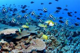 Sharm El-Sheikh Diving Paradise (8 Days – 7 Nights) including Cairo Highlights